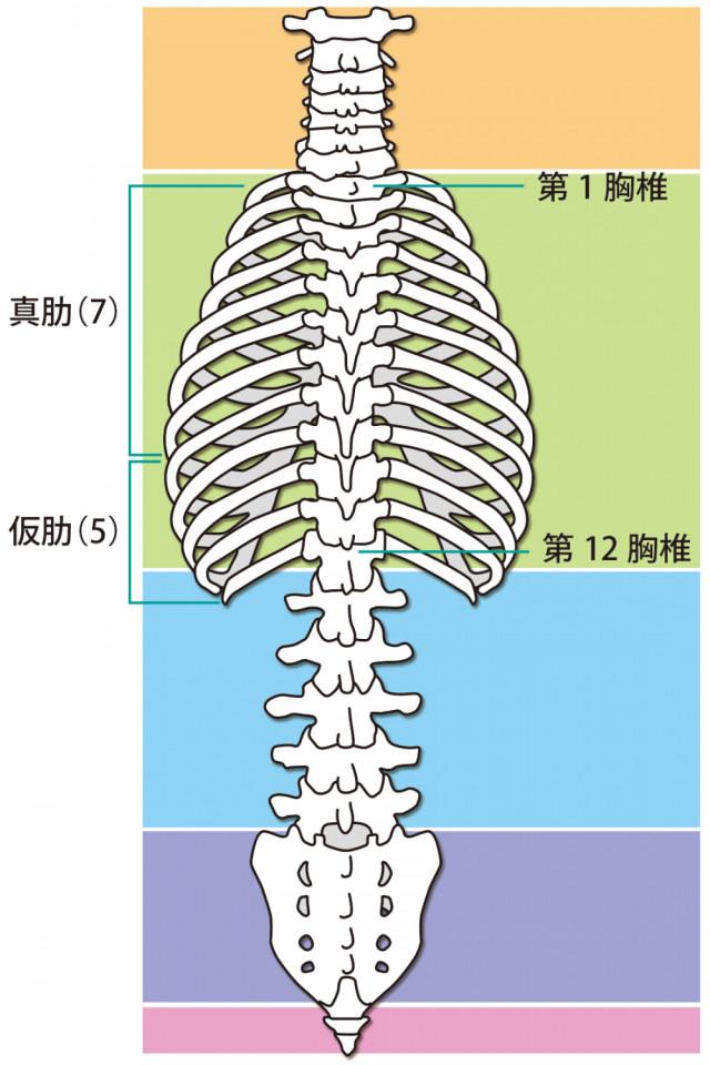 肋間神経痛へのアプローチとは?