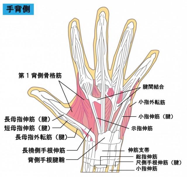 腱鞘炎を施術する際に意識している事